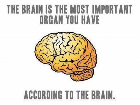 Brain is the most important organ